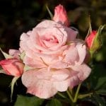 The Roses and Thorns of Relationship Marketing