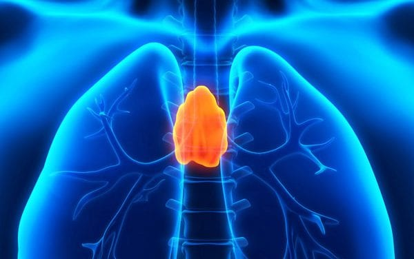 Regenerative Medicine Breakthrough: Team Grows First Functional Thymus