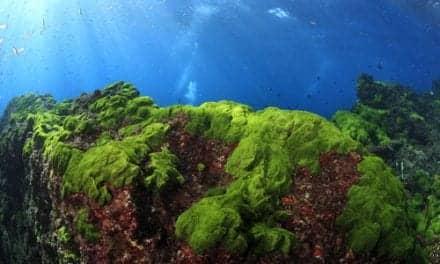 Coming Soon? Algae-Based Sunscreens