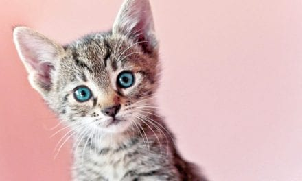 This Skin Care Brand Sort Of Infuses Their Products with Cat Poop, and It Costs More Than Rent