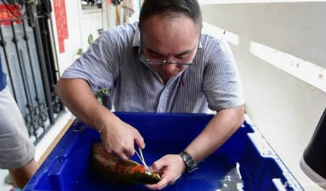 Want Lovelier Fins? Pet Fish Get Cosmetic Fixes, as Owners Angle for Perfection