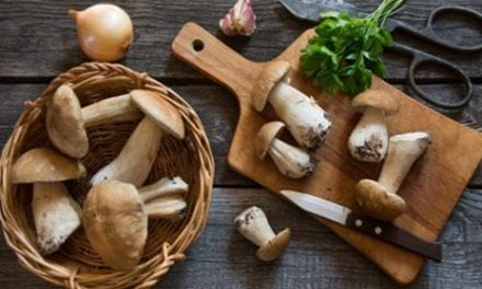 Do Mushrooms Hold the Key to Anti-Aging?