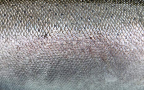 Fish Skin: the New Miracle Anti-Aging Ingredient?