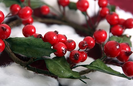 Christmas Berry Tested as Possible Melanoma Fighter