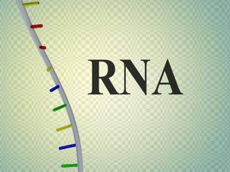 Loose RNA Molecules Rejuvenate Skin, According to Study