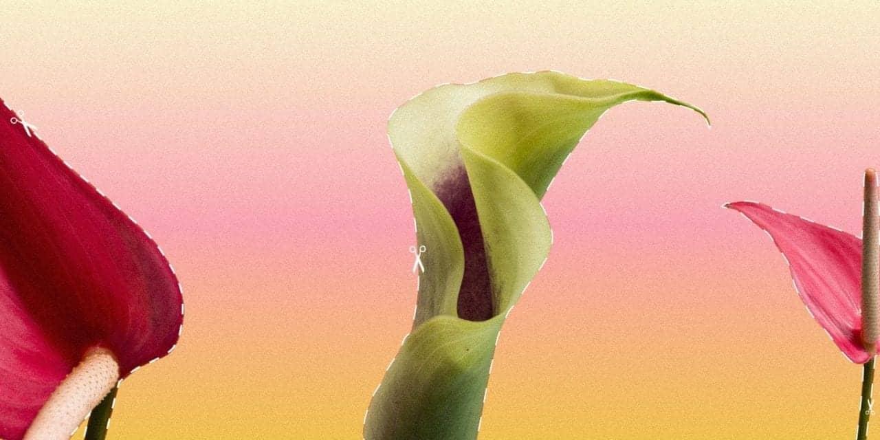 The Rise Of The Designer Vagina