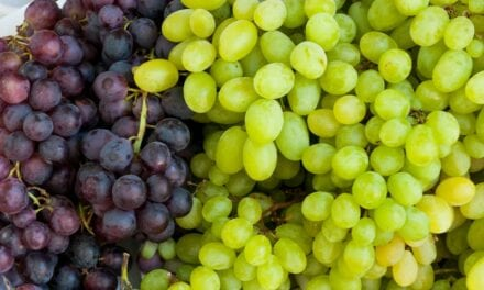 'An Edible Sunscreen': Grape Consumption May Protect Against UV Damage to Skin
