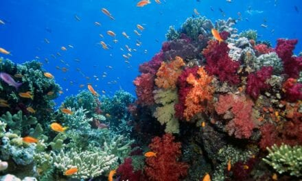 Methylene Blue Could Be an Effective Alternative to Sunscreens That Cause Coral Damage
