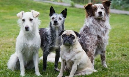 Can Helping Dogs Live Longer Unlock the Secrets of Human Aging?